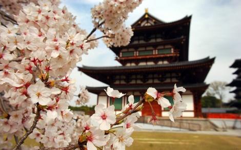Sakura_la_flor_del_cerezo_dream_clowd_cultura_japonesa_la_primavera